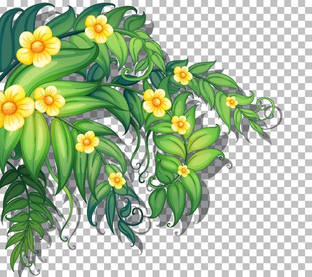 투명에 잎이 있는 열대 꽃