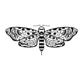 Tropical flying moth