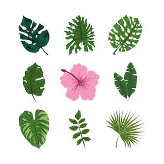 熱帯の葉は花を残します