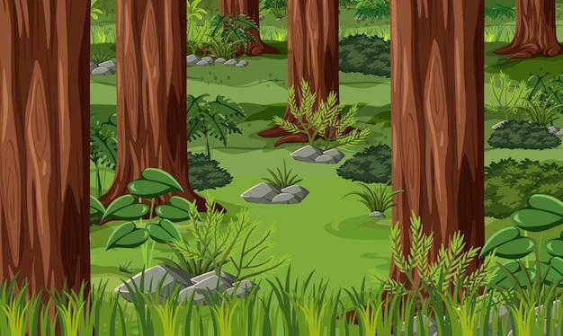 Tropical forest landscape background
