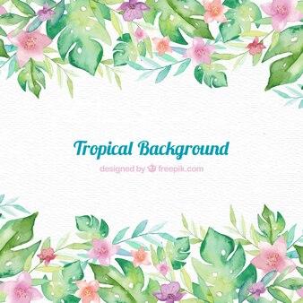 Tropical frame background
