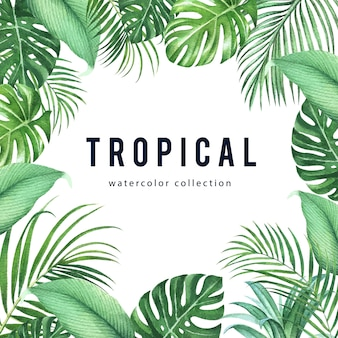 Tropical frame design with monstera leaves and palm leaves ,vector illustration.