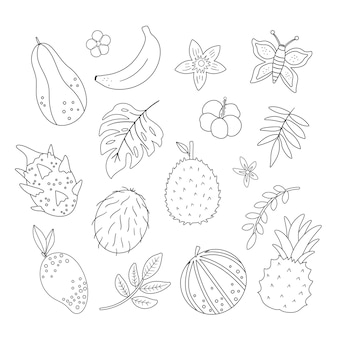 Tropical fruit, flowers and leaves outlines. jungle foliage and florals black and white illustration. hand drawn flat exotic plants isolated