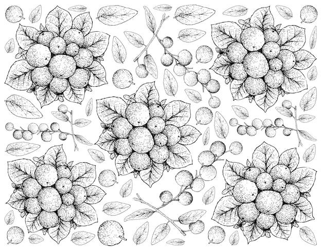손으로 그린 스케치의 열대 과일 일러스트 바탕 화면