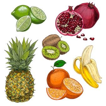 Tropical fruits. pineapple, lime, pomegranate, kiwi, banana, orange.