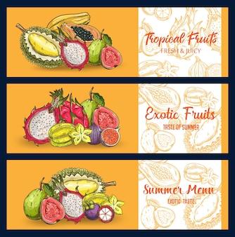 トロピカルフルーツは、バナーをスケッチします。ピタハヤ、パゴヤ、イチジク、ドリアン、ゴレンシ、グアバ、ライチ、パッションフルーツのマンゴスチン。刻まれた有機のエキゾチックなフルーツの夏のメニュー、自然で健康的な選択