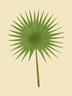 Tropical green fan palm leaf