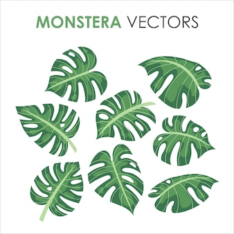 Tropical green monstera or palm tree jungle leaves flat illustration for summer