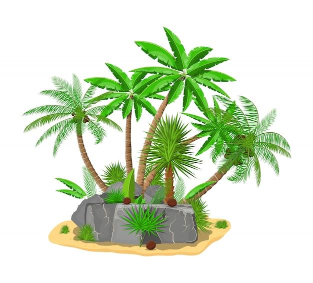 Тропическая зеленая пальма. листья джунглей