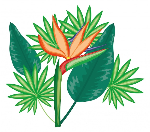 Tropical heliconia flower and leafs plants