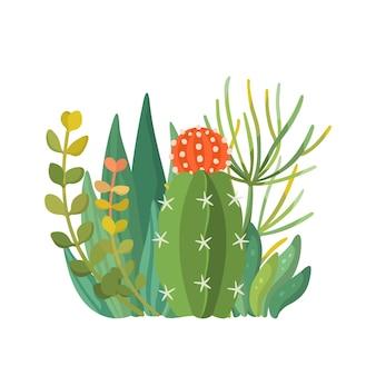 Тропические комнатные растения и состав кактусов. букет декоративных изолированных суккулентов