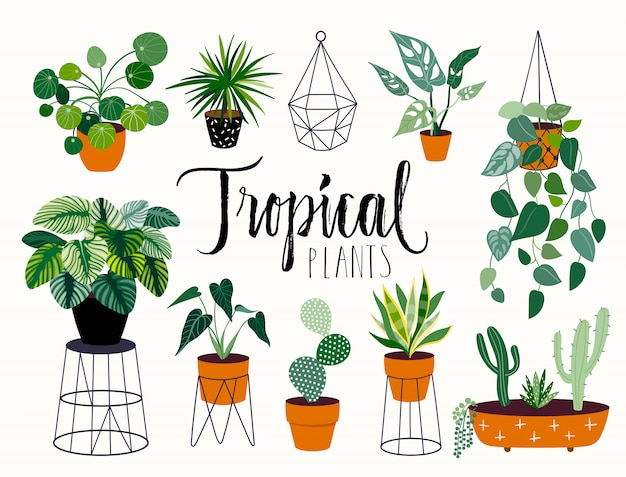 Tropical house plants collection with different elements, isolatedand hand lettering