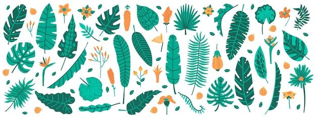 Листья тропических джунглей