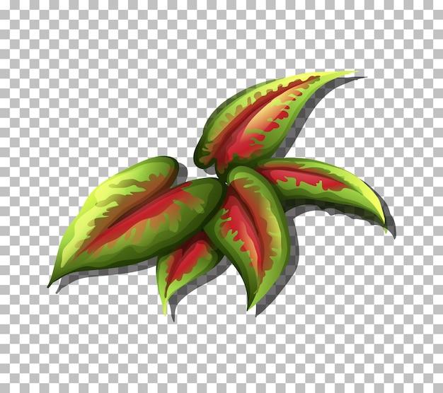 투명 한 배경에 열 대 잎