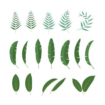 열 대 잎 벡터 아이콘 디자인 일러스트 템플릿