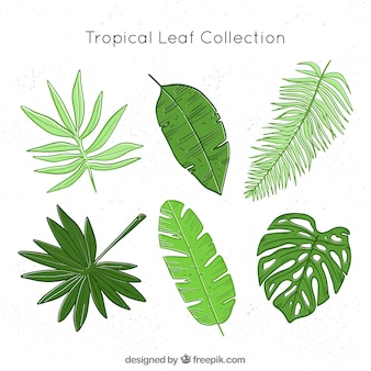열 대 잎 컬렉션