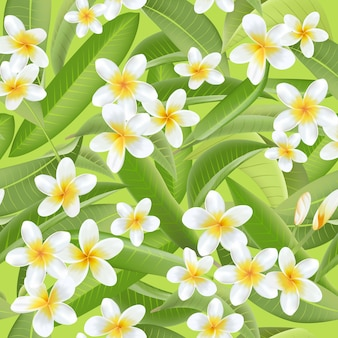 Tropical leaves background flowers plumeria