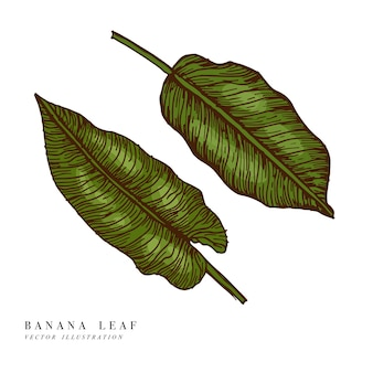Tropical leaves - banana. hand drawn background