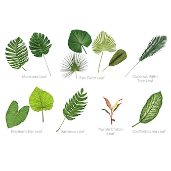 Tropical leaves botanical vector illustration