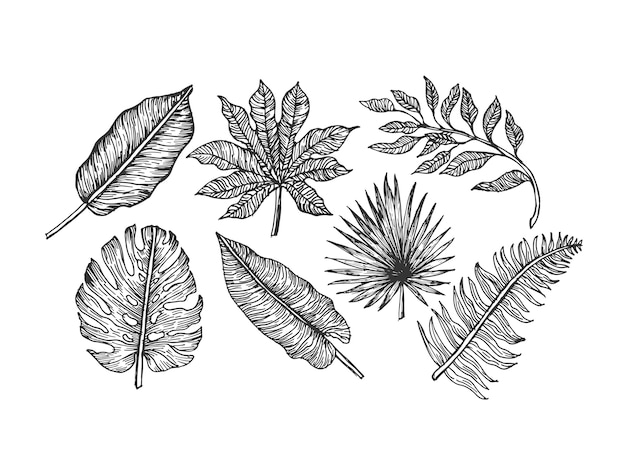 Tropical leaves collection. engraved jungle leaves set. palm leaves. illustration