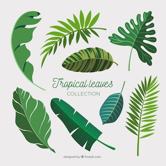 Tropical leaves collection in flat design