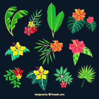 Tropical leaves collection in flat style
