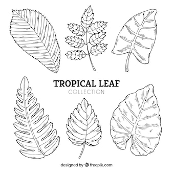 Tropical leaves collection in hand drawn style