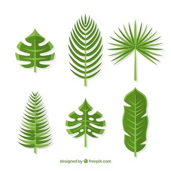 Коллекция тропических листьев в плоском стиле
