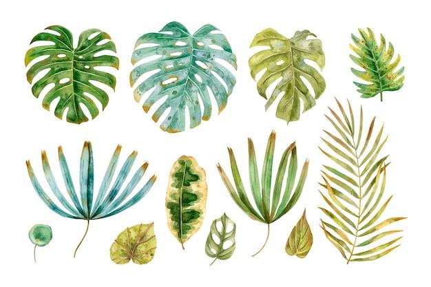 Коллекция тропических листьев в стиле акварели.