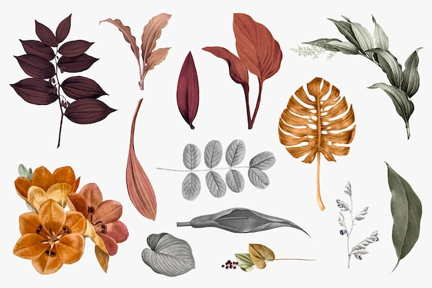 Tropical leaves collection set