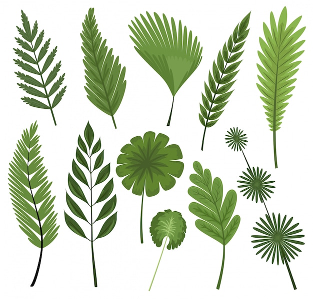 Tropical leaves collection. vector isolated elements