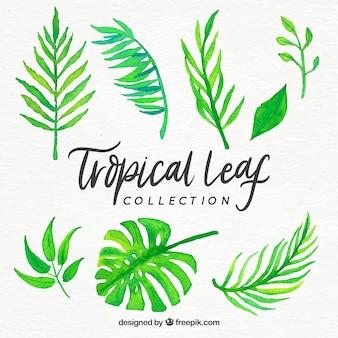 Collezione di foglie tropicali in stile acquerello