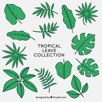 열대 나뭇잎 컬렉션