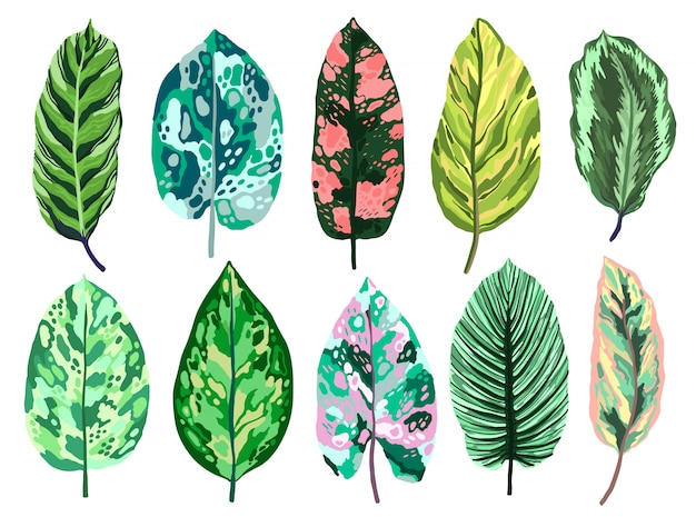 Tropical leaves diffenbachia set collection.