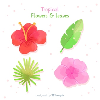 Tropical leaves and flowers collectio