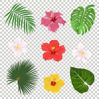 Tropical leaves and flowers icon set isolated on transparency grid background. palm, banana leaf, hibiscus and plumeria flowers. jungle tree design templates. botanical and floral collection