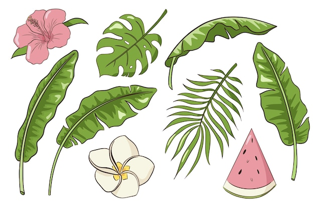 Tropical leaves and flowers set. collection of hand drawn exotic plants and blossoms. banana, palm and monstera leaves, hibiscus, plumeria and vanilla flowers , watermelon slice. premium vector