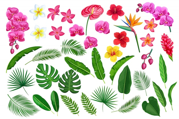Tropical leaves and flowers Premium Vector