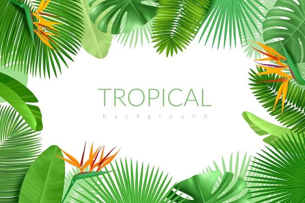 熱帯の葉のフレーム。リアルな夏のエキゾチックな植物、ハワイのヤシの背景、モンステラ、バナナ、ココアの緑のバナー。ベクトルポスター