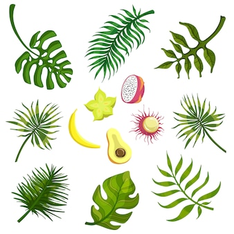 Tropical leaves and fruits