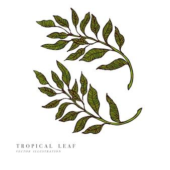 熱帯の葉。手描きイラスト。刻まれたジャングルの葉