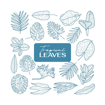 Tropical leaves icon outline set. minimal flowers vector collection.