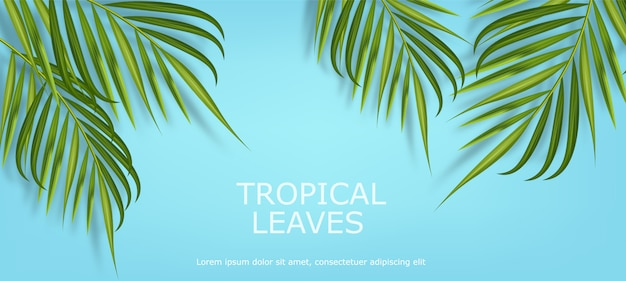 Tropical leaves realistic isolated, blue background