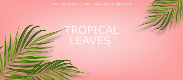 Tropical leaves realistic isolated, pink background, summer