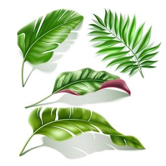 熱帯の葉のリアルなセットイラスト