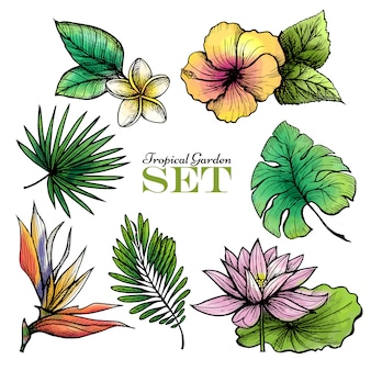 Tropical leaves set color