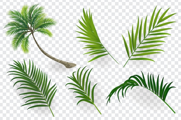 Tropical leaves set isolated