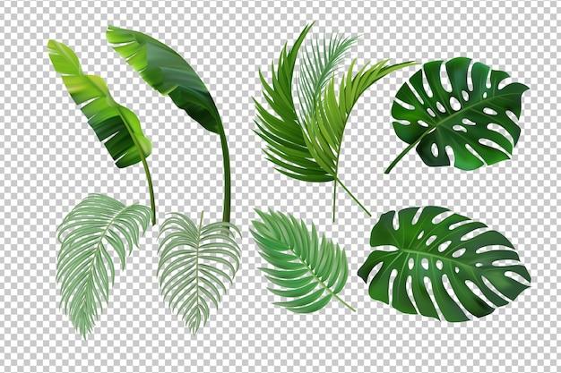 Тропический набор листьев изолирован.