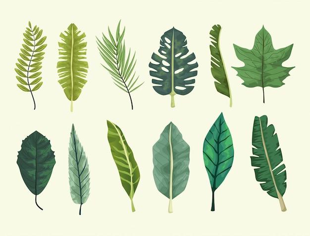 열 대 잎 세트