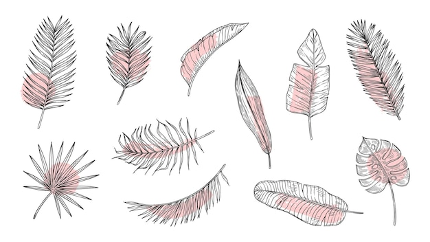 Набор эскизов тропических листьев